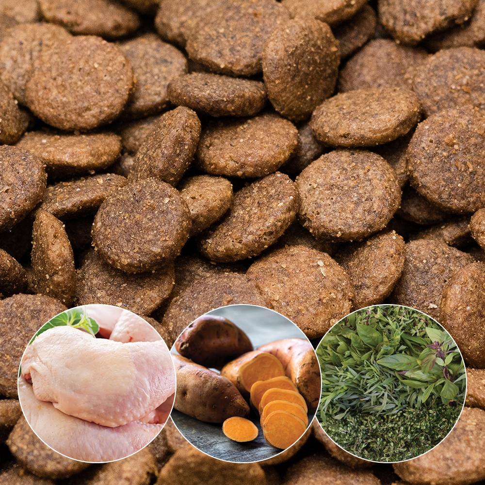 ADULT – Chicken, Sweet Potato & Herb